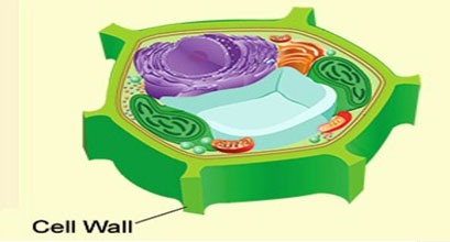 cellWall