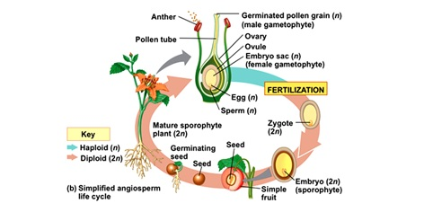What plants reproduce sexually